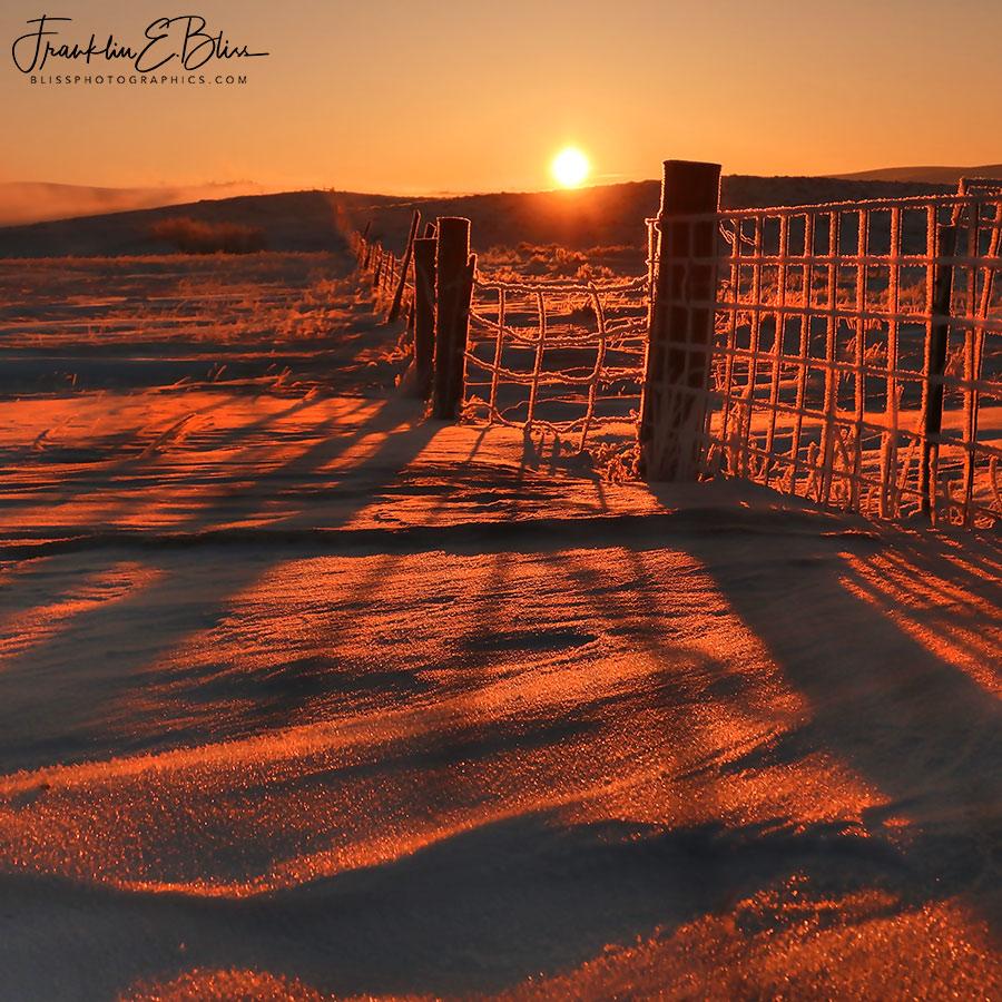 Hoar Frost Fence Line