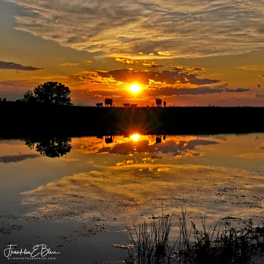 Reflections Sunset Longhorn Drink