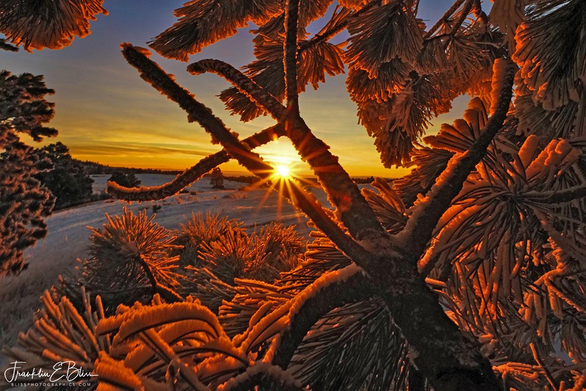 Hoar Frost Red Light