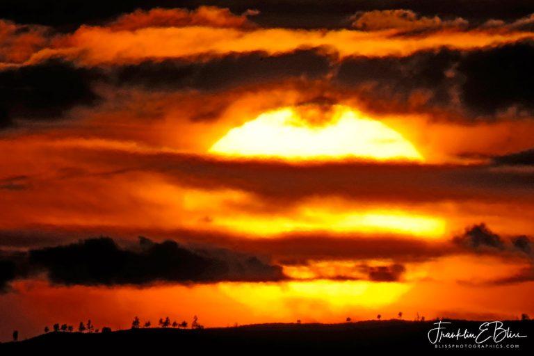 Sunset Through Natures Blind 011520D