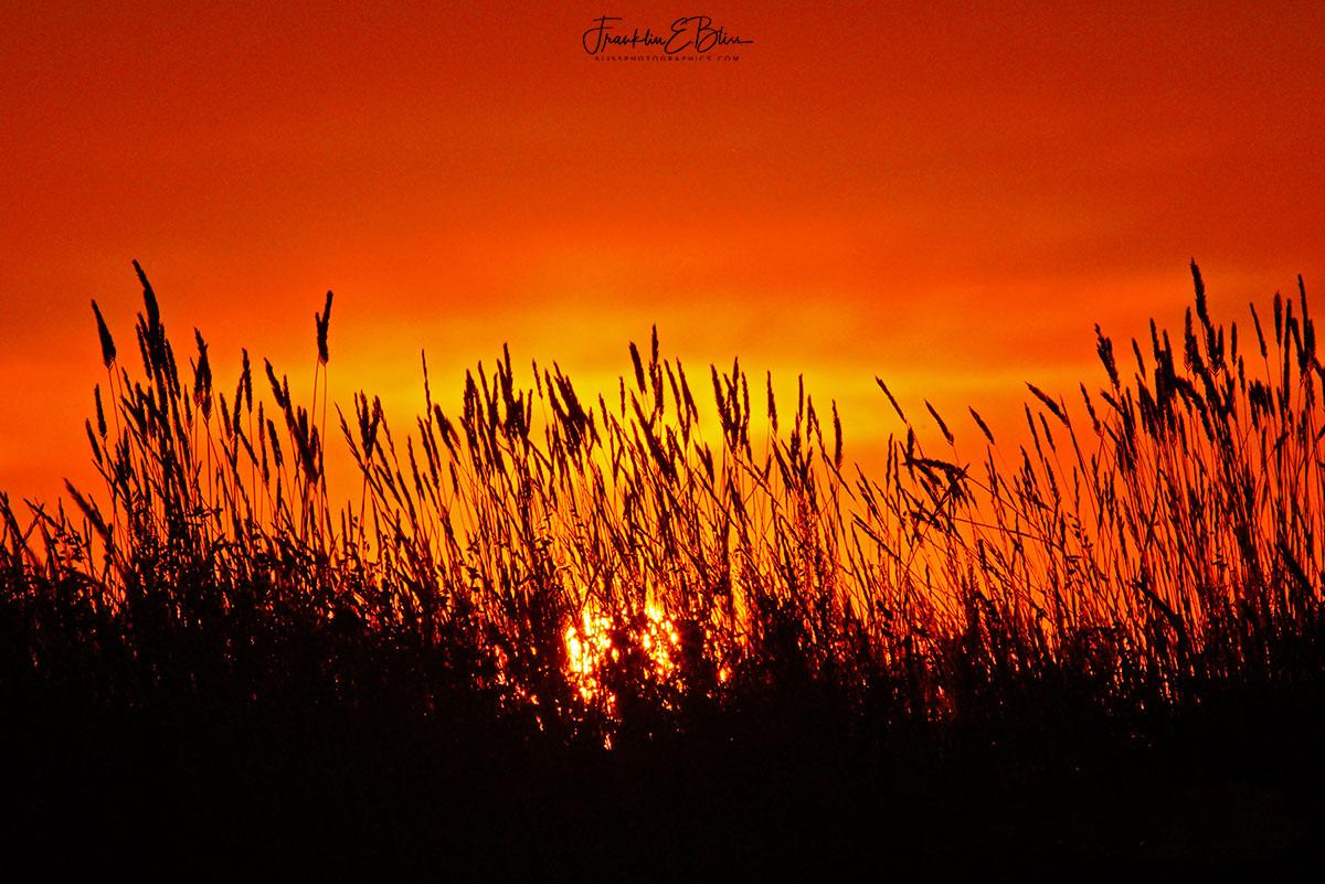 Grass Stand Sun Filter