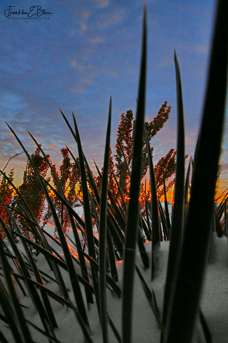 Yucca Morning Sky Show