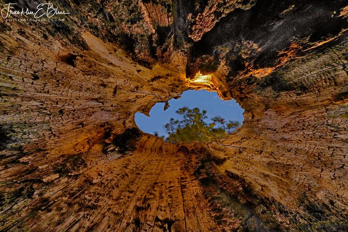 Hollow Tree Portal to the Sky