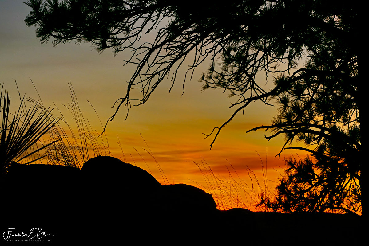 Sunrise Silhouette Trees and Rocks