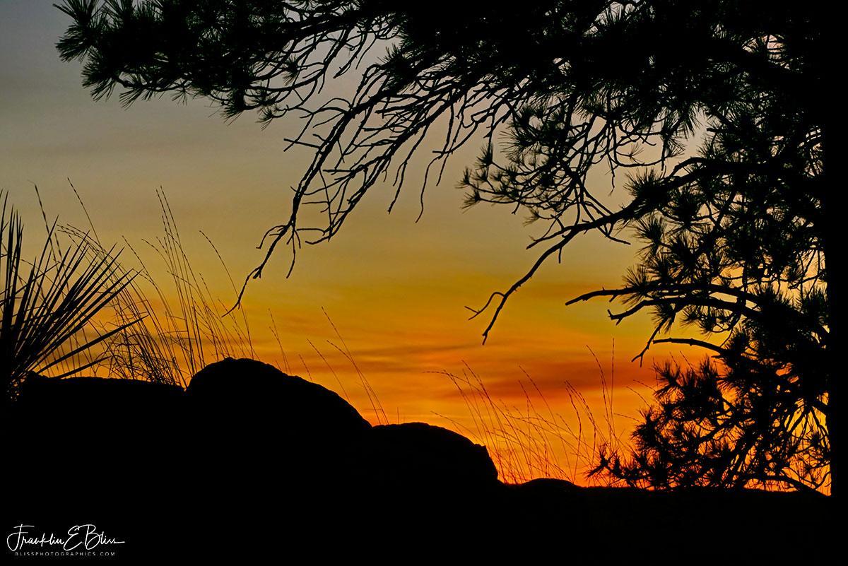 Sunrise Silhouette Trees and Rocks