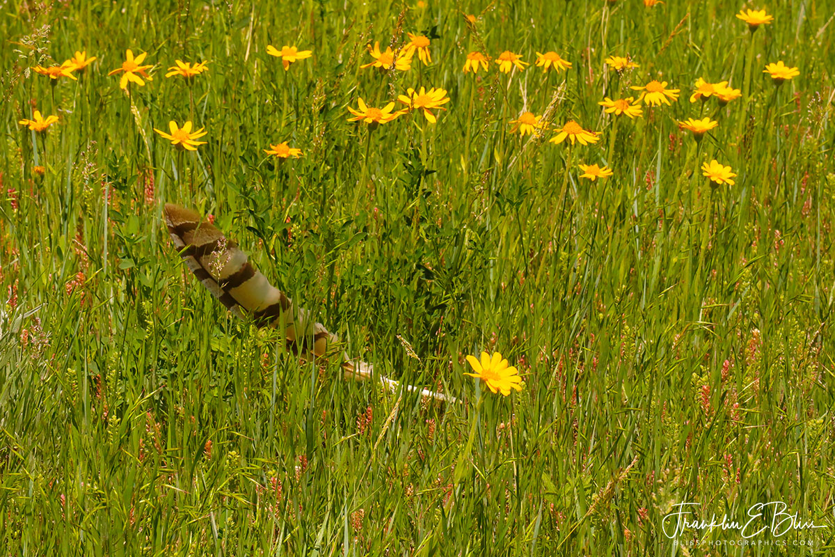 Wild Flowers and a Raptor Feather