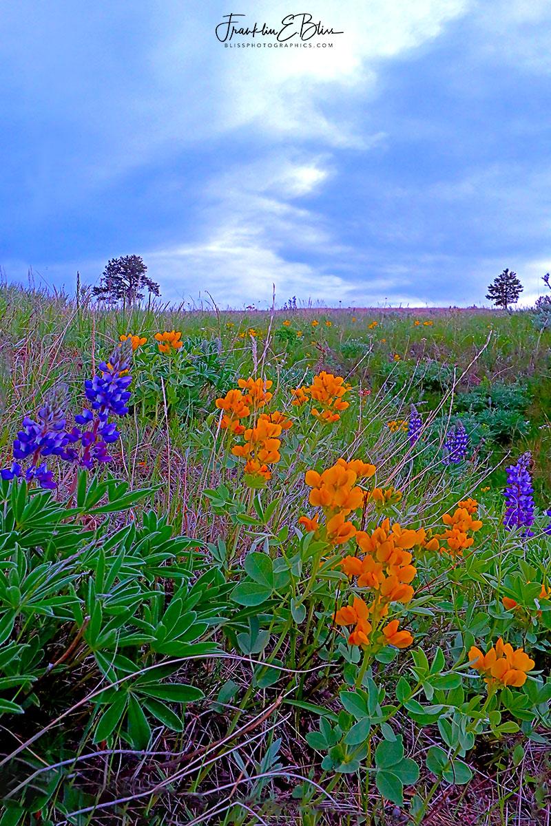 Backcountry Spring Wildflowers