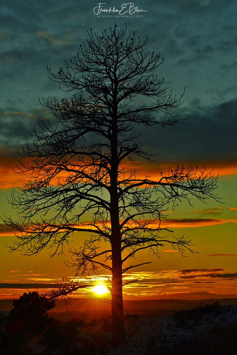 Lone Tree Banded Sunset