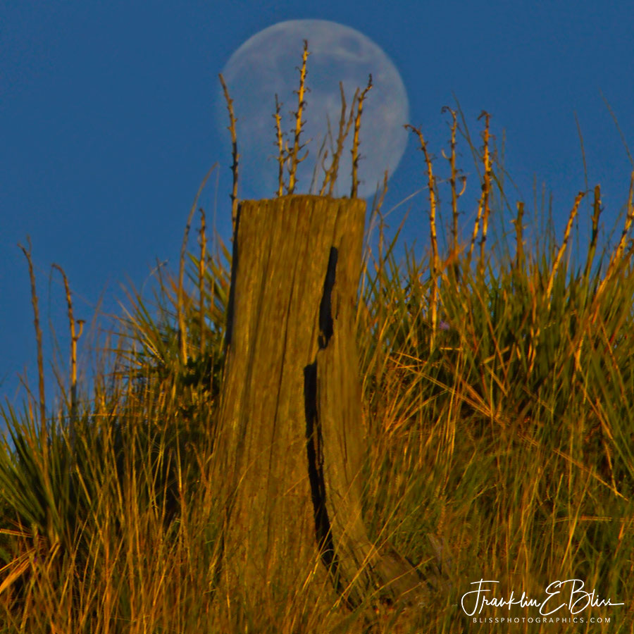 Moon On a Stump