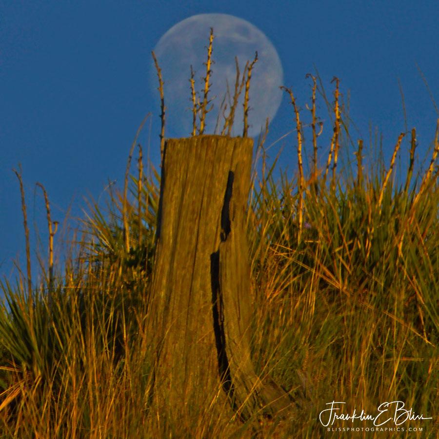 Moon On a Stump