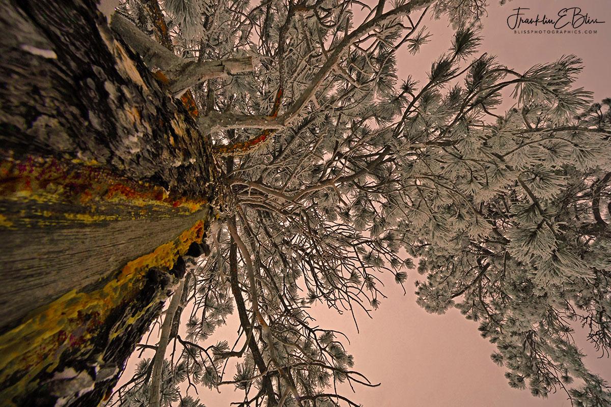 Perspective Frosty Lightning Scar
