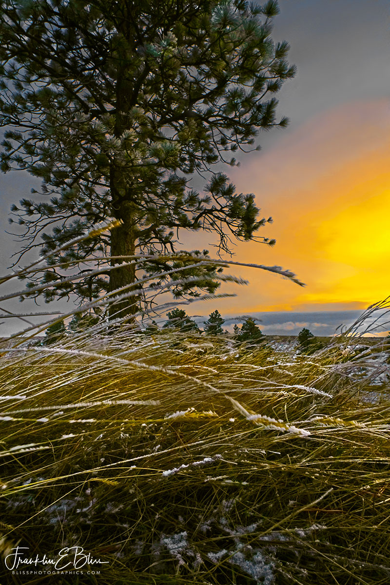Windy Bent Grass Sunset