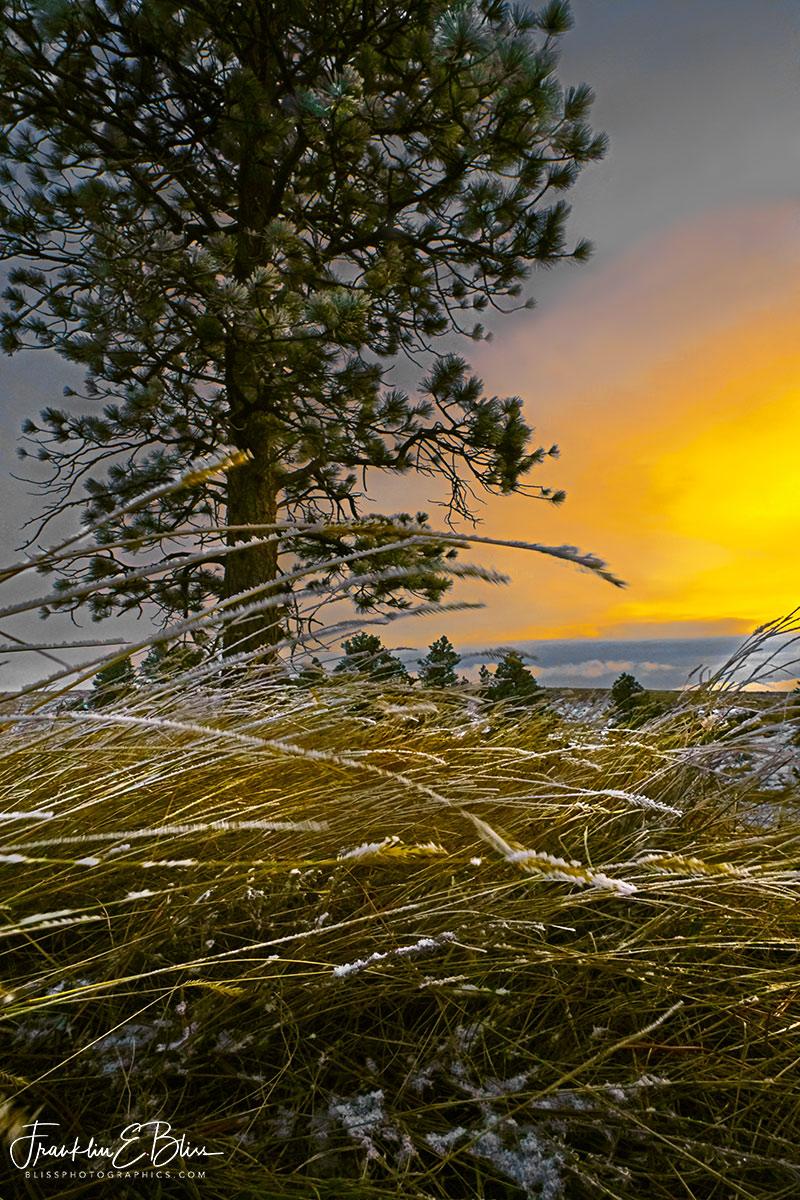 Windy Bent Grass Sunset