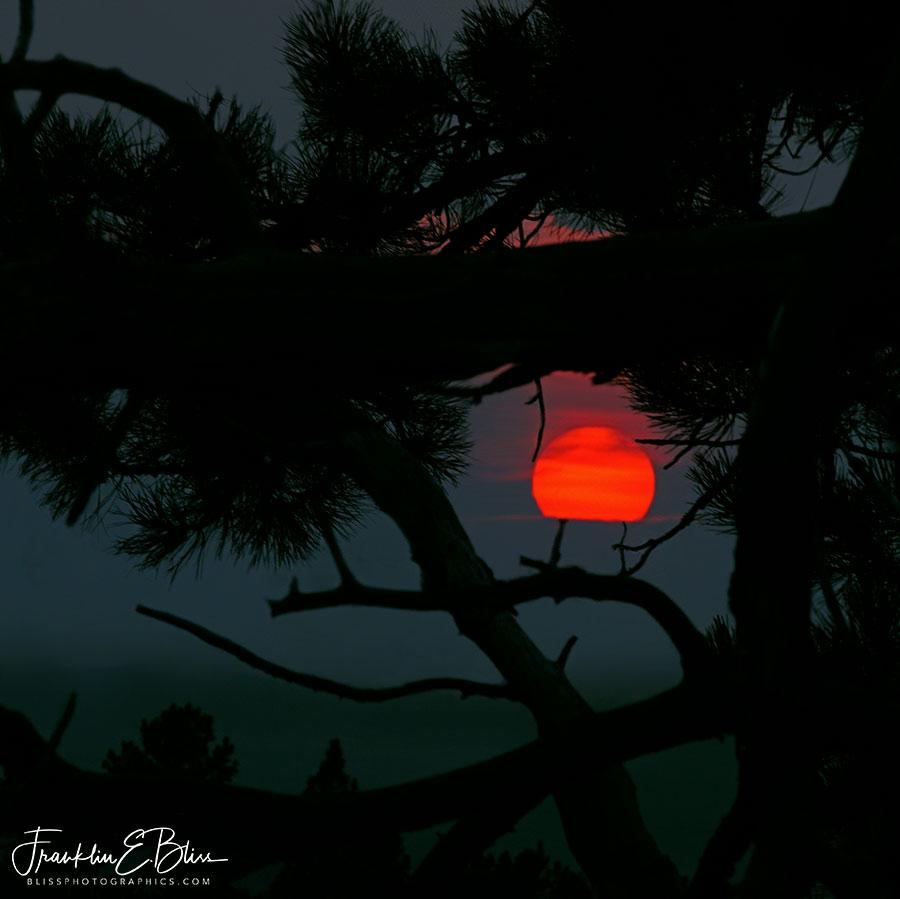 Smokey Tree Framed Sunset