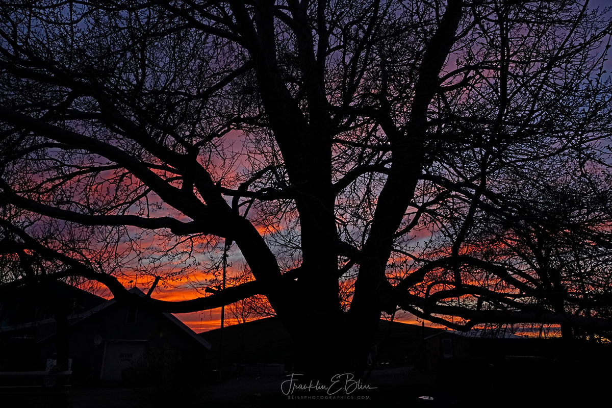 Twilight Through Branches