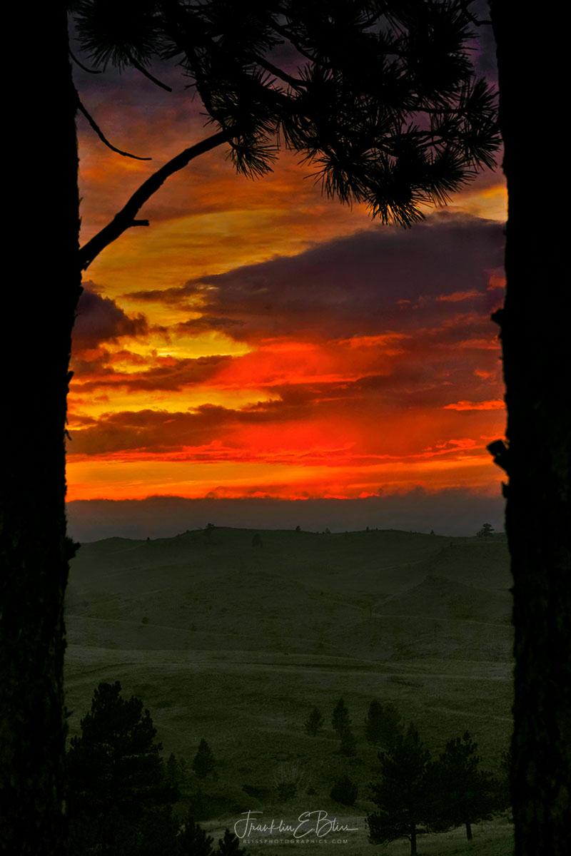 Twilight Tree Trunk Frame