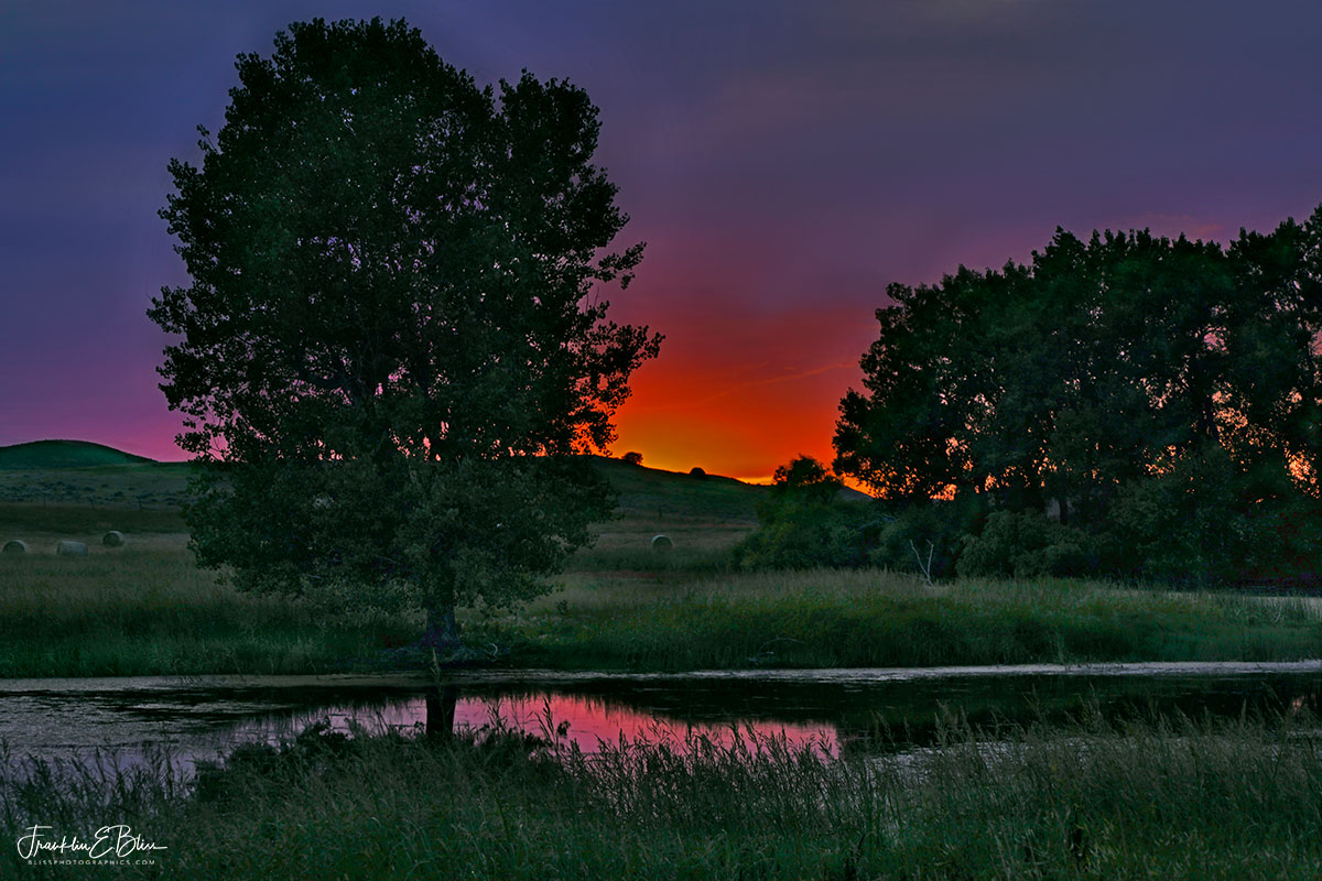 Wetland Sunset Summer Green