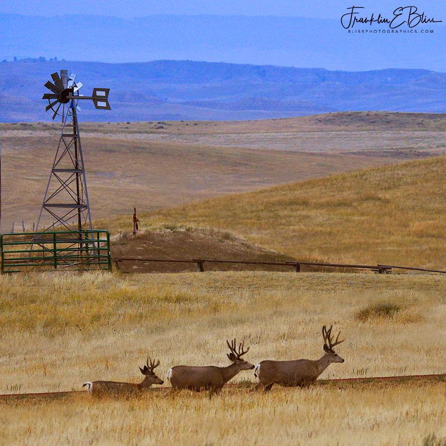 Three Amigos and a Windmill