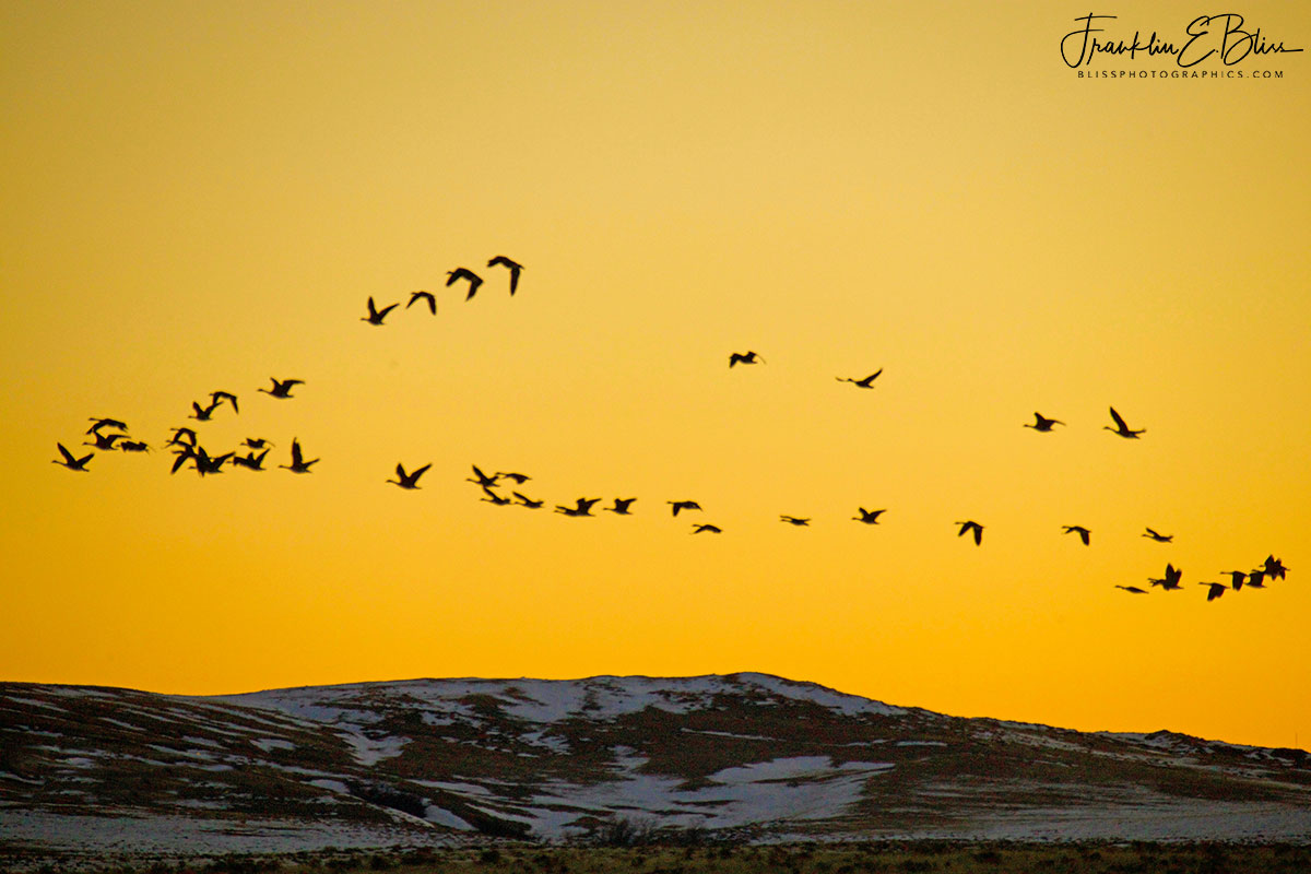 Migrating Geese in Twilight Alpenglow