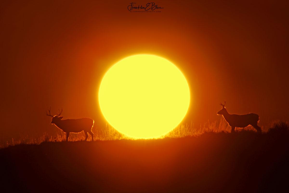 Two Illuminated Bucks