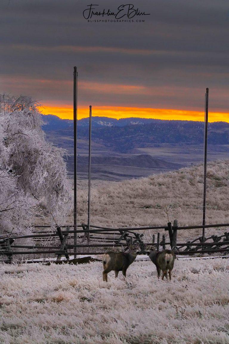 Deer Watching the Frosty Sunset 031720G