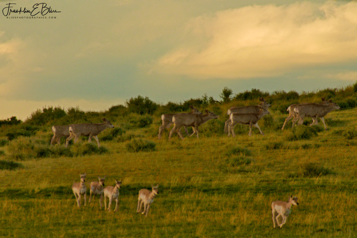 Deer Marching Two by Two