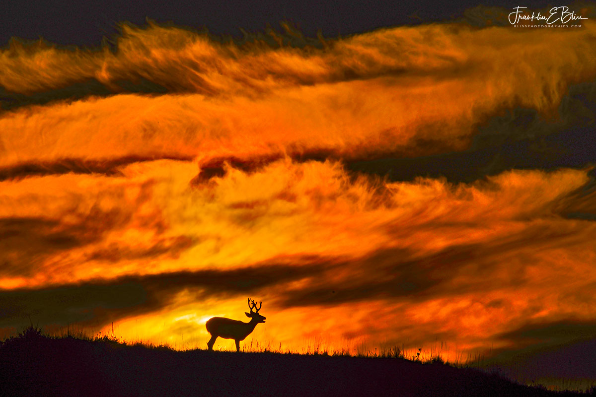 Buck and the Sunset