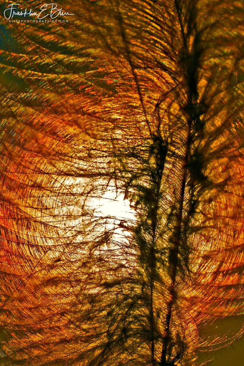 Down Feather Sun Filter