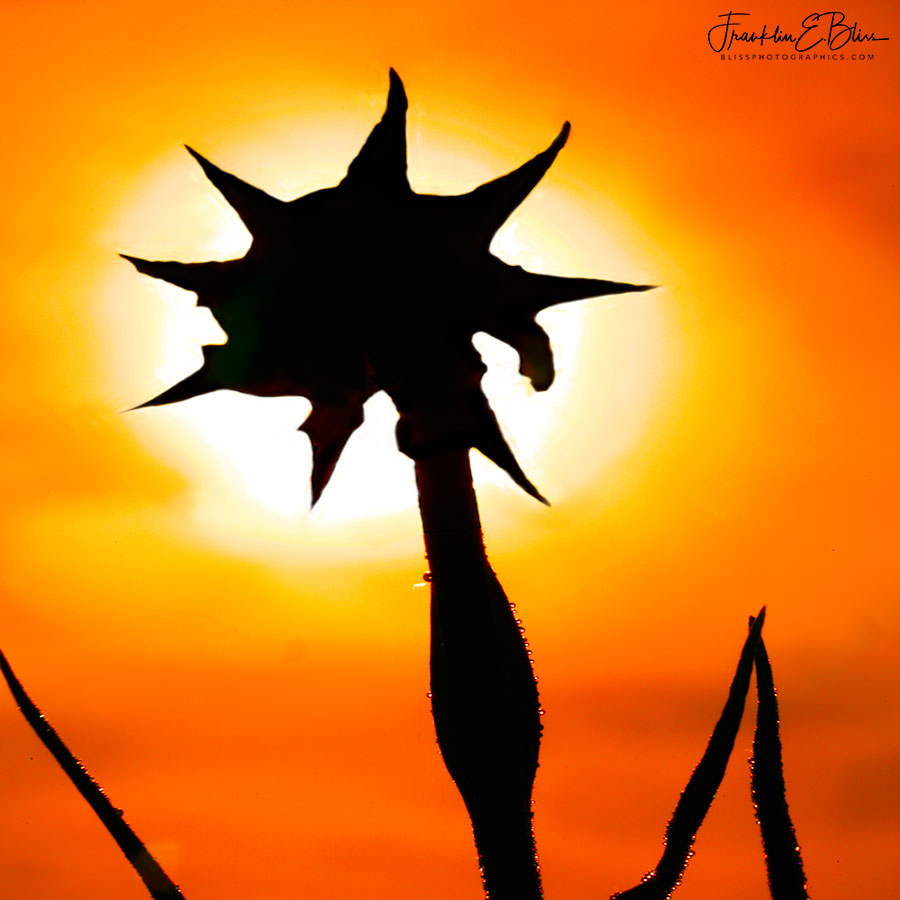 Starburst Silhouette Sunset