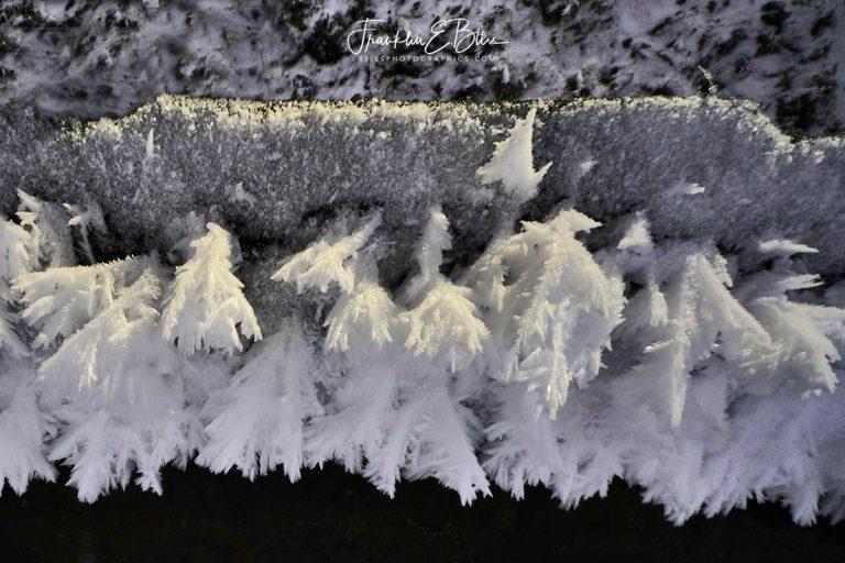 Frosty Hoar Frost Feathers 031720A