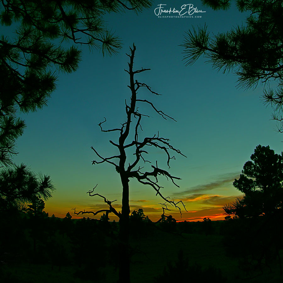 High Ridgeline Snag at Twilight