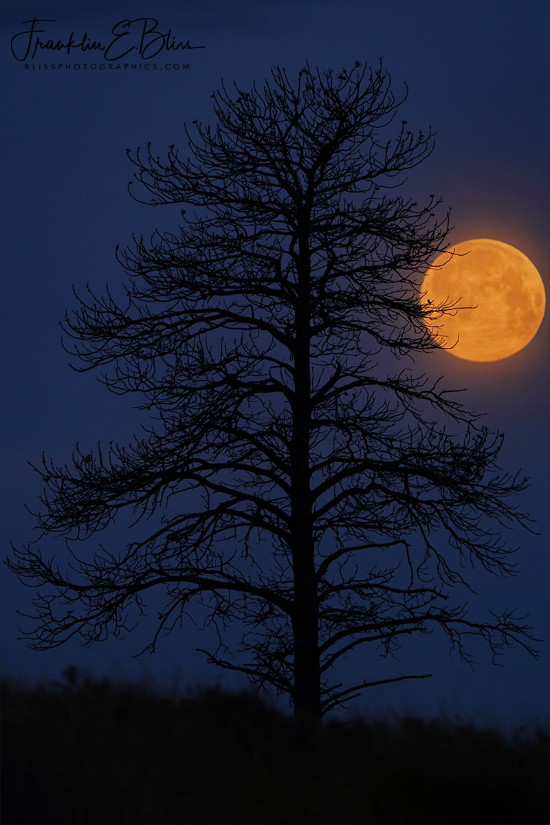 Lone Tree Full Moon