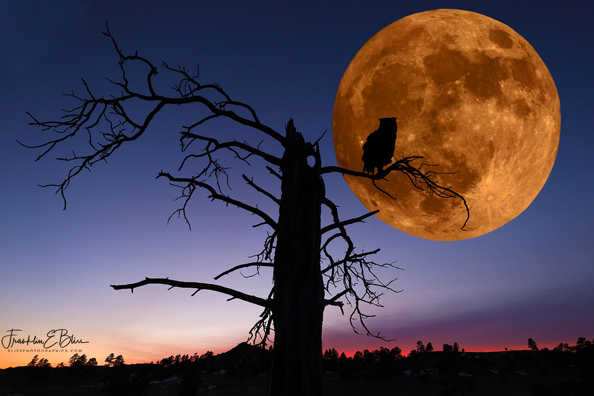 Moon Owl Composite ART