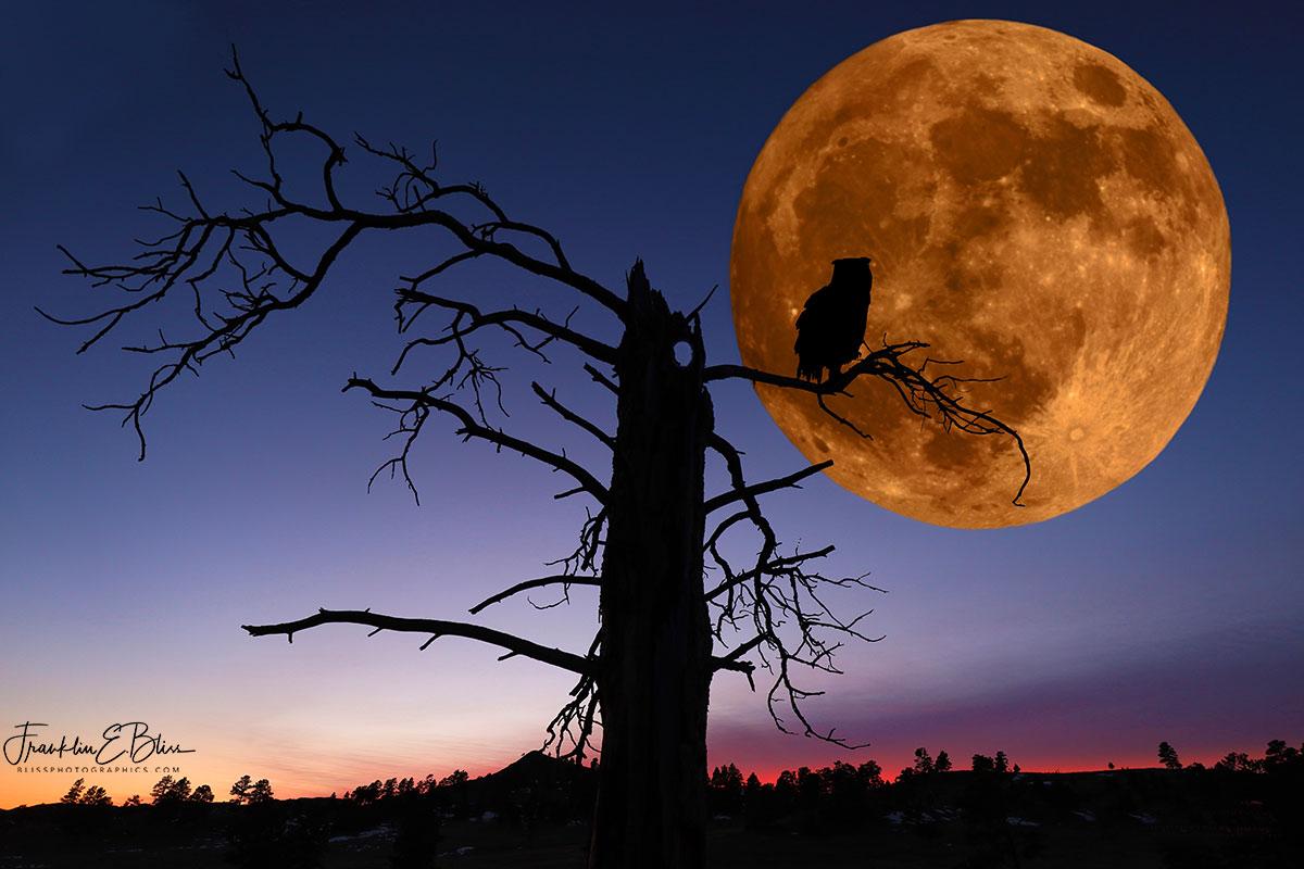 Moon Owl Composite ART