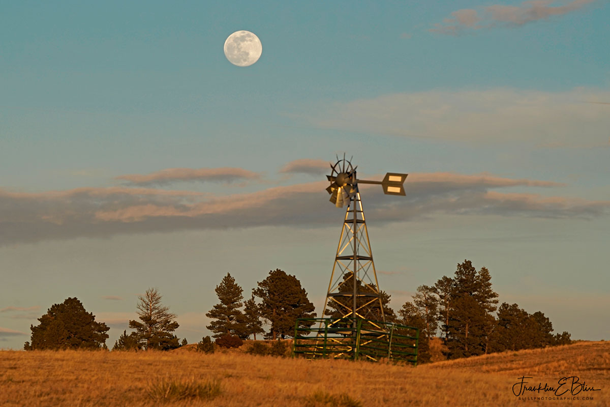 Windmill Moon Over Trees