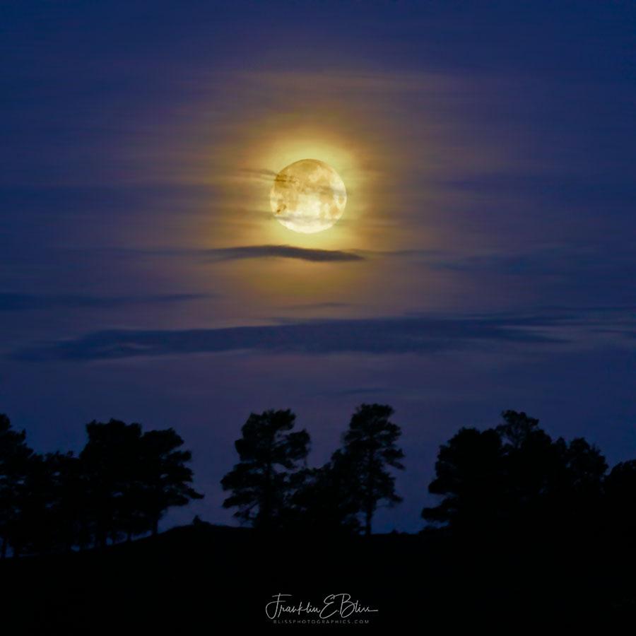 Blue Veiled Moon Rising