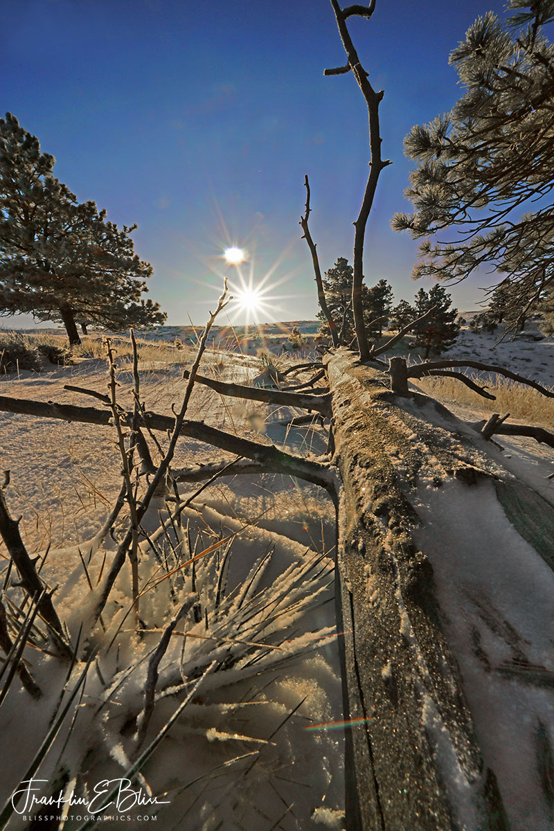 Frosty Perspective Snaggy Sun