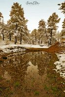 Springtime Snows Deep Gullies 031220P