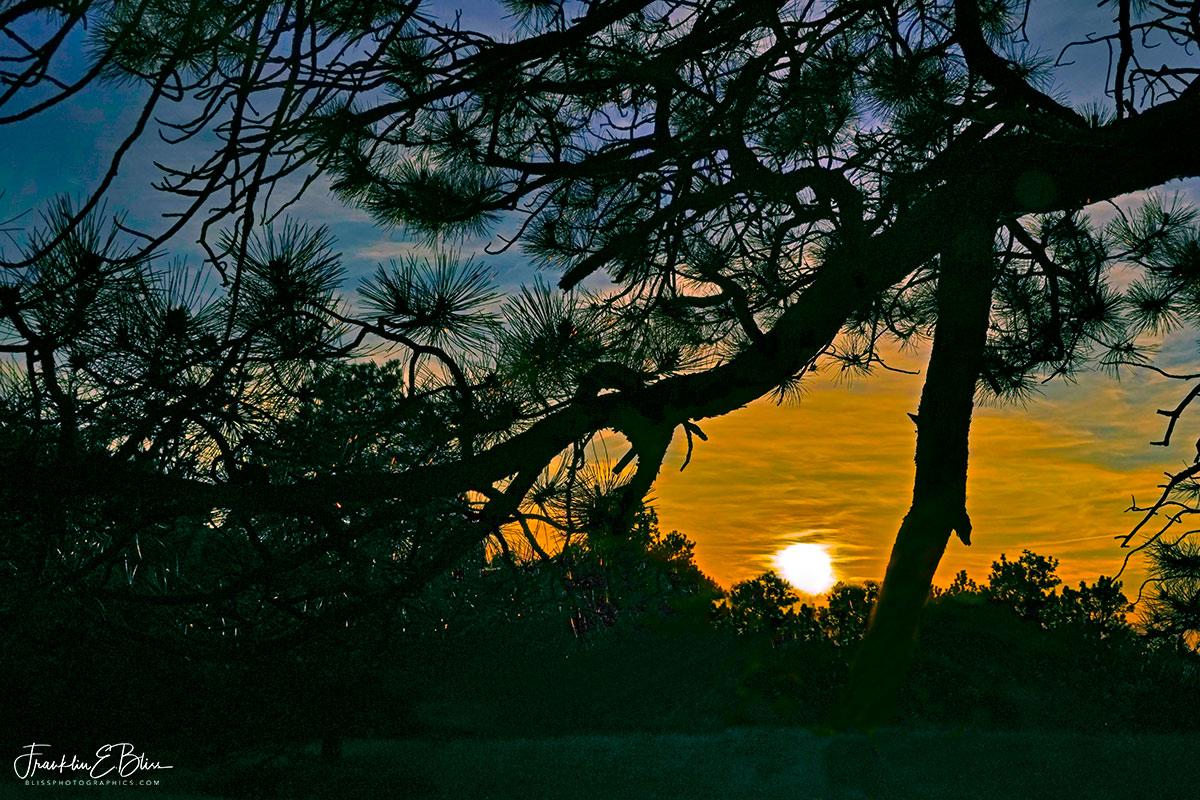 Veiled Sunset Tree Frame