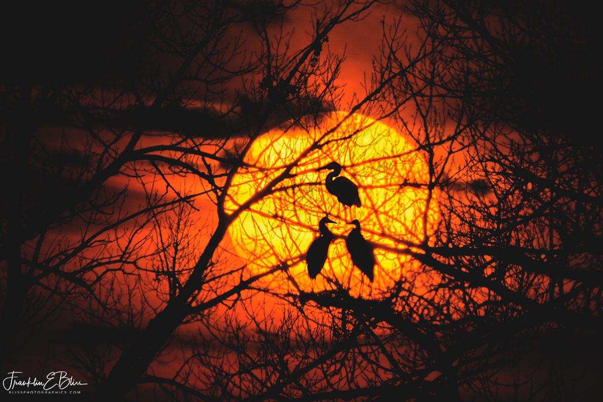 Blue Heron Sunset