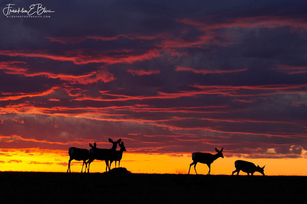 Five Deer Watching Sunset
