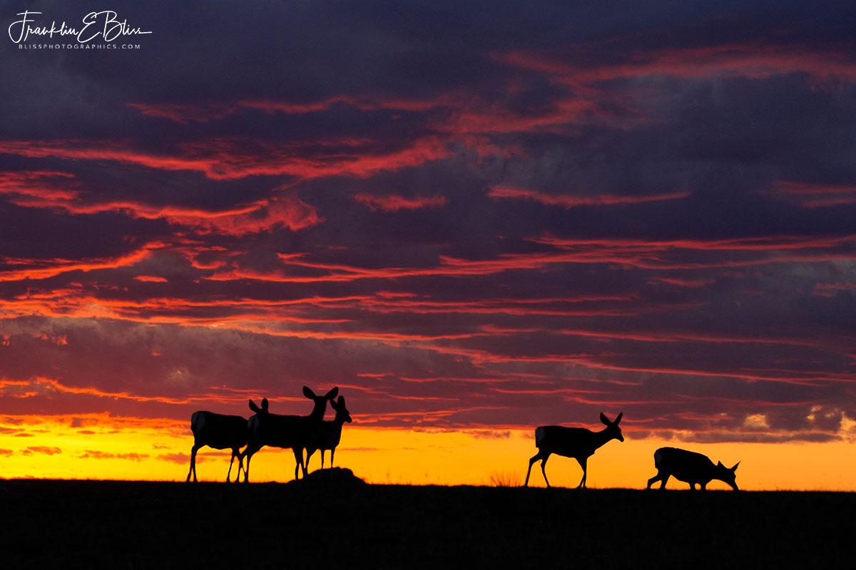 Five Deer Watching Sunset