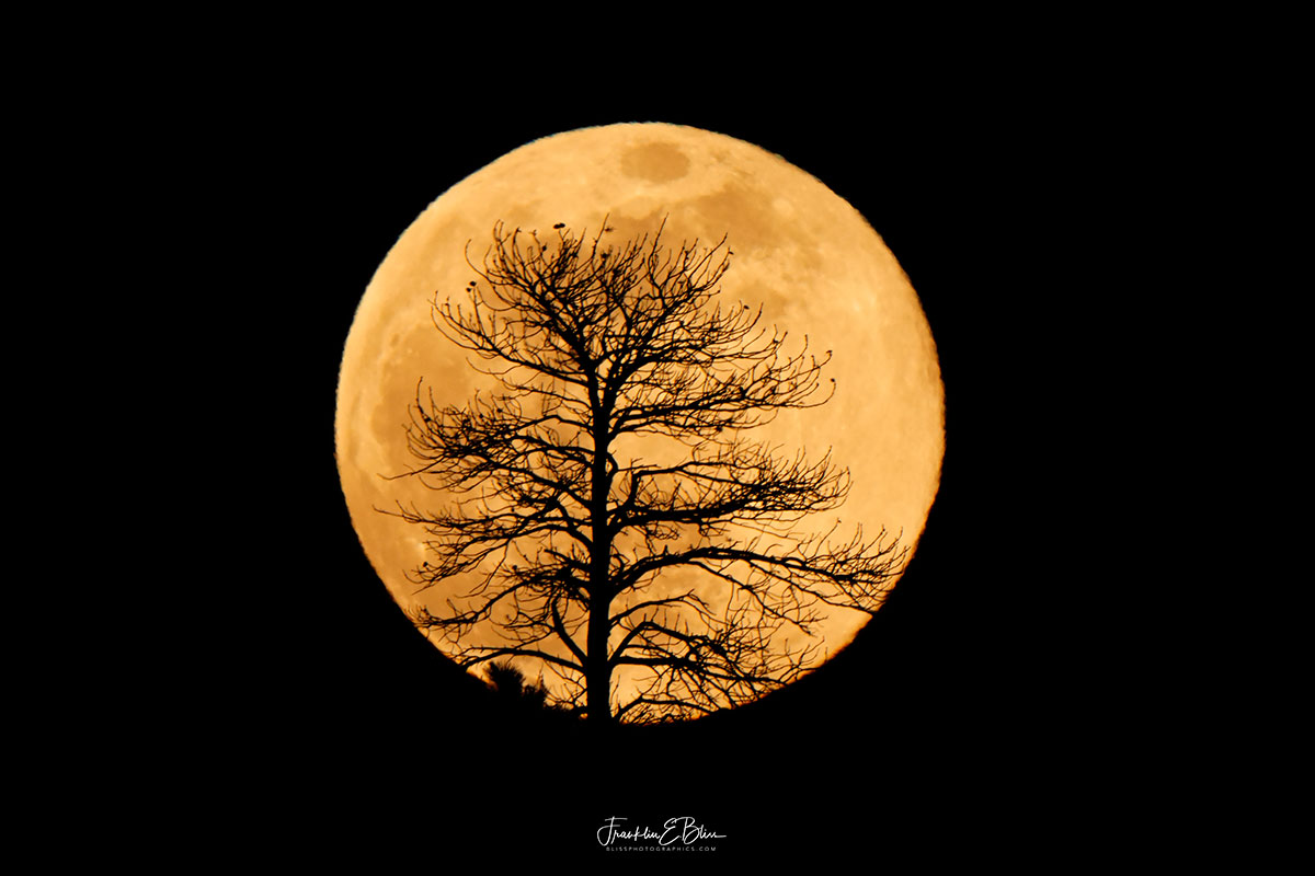 Full Moon Lone Tree