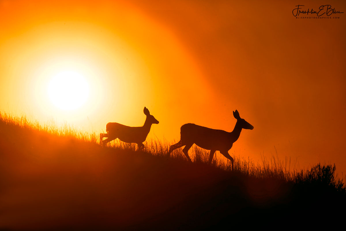 Deer Mother Daughter and Sun