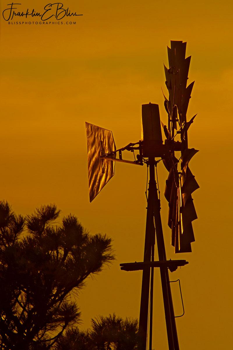 Windmill in a Good Light