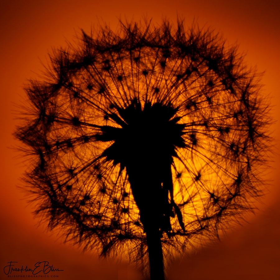 Dandi Sunset Silhouette
