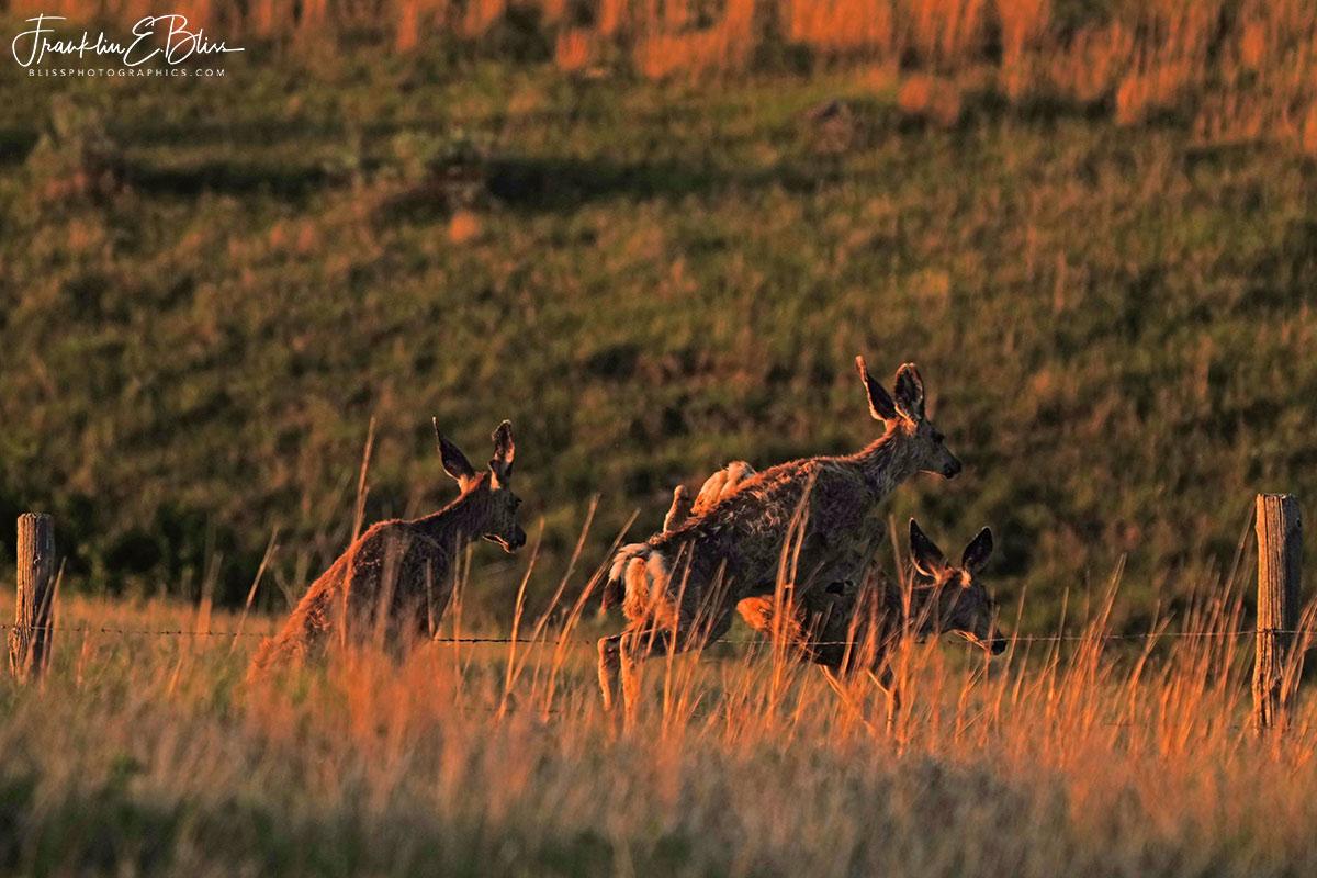 3 Deer in the Air