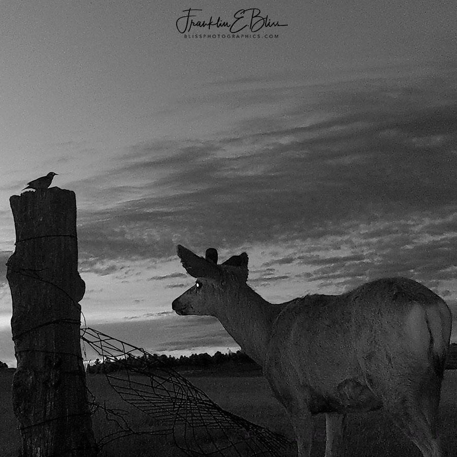 Deer and Meadowlark Watching Twilight