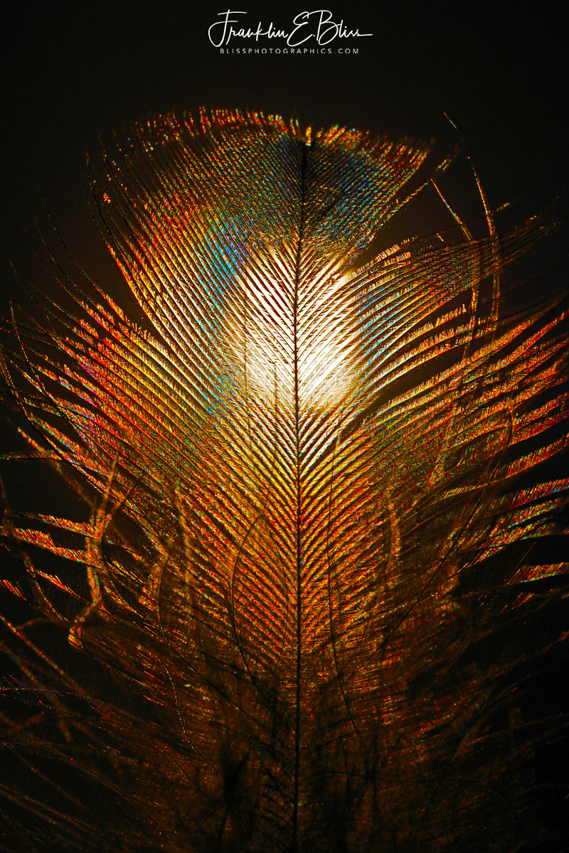 Polarized Light Feather Filter