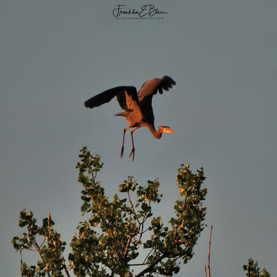 Heron Hang Glider